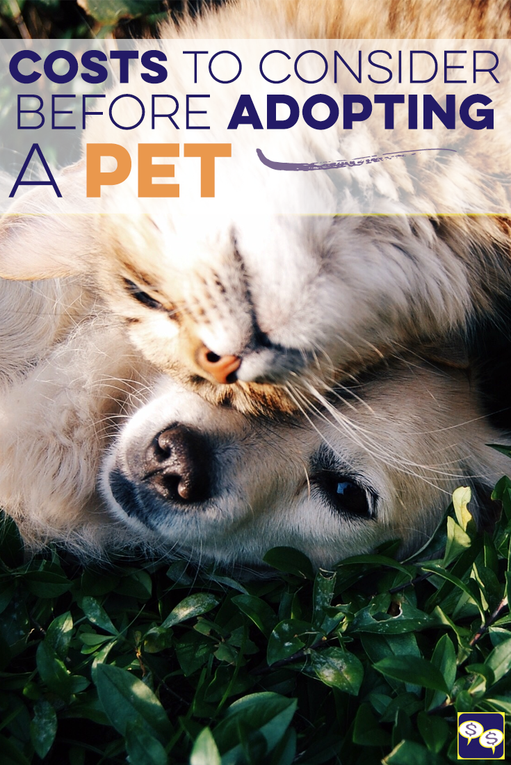 The cost of pets is more than most people realize. Before you consider adopting a dog or a cat, learn how much you can expect to spend and how to save.